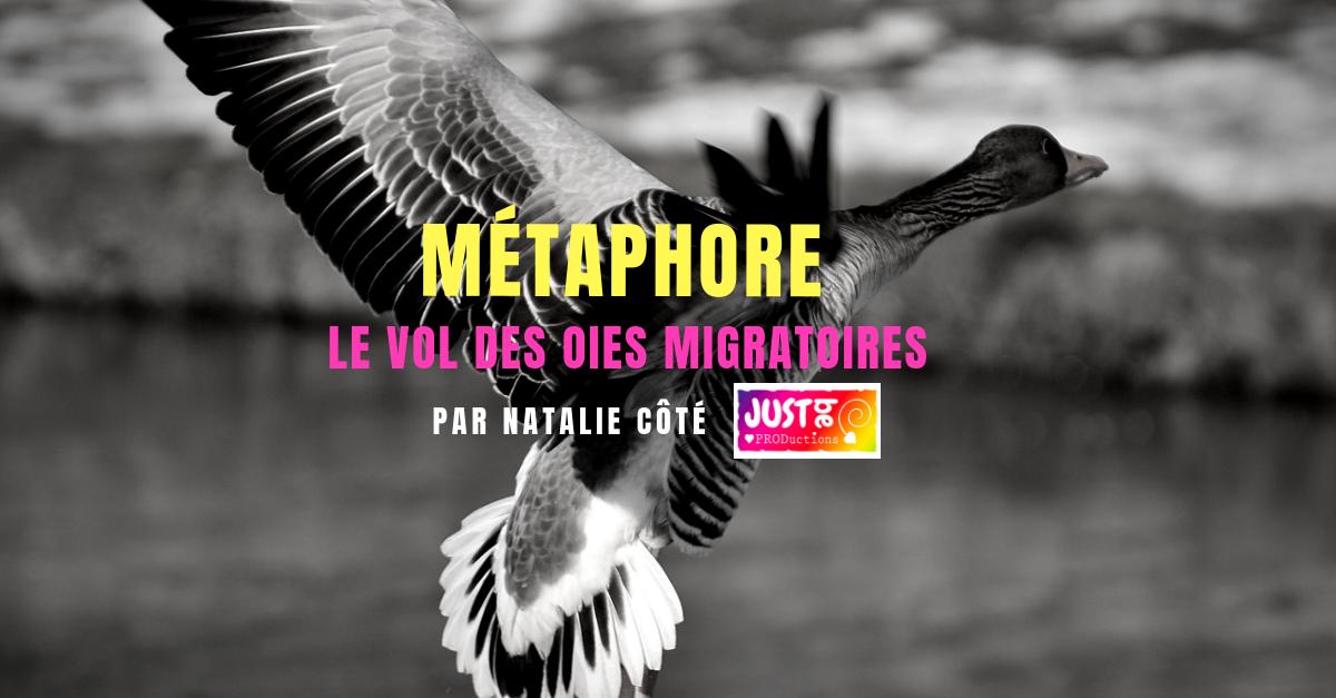 Le vol des oies migratoires